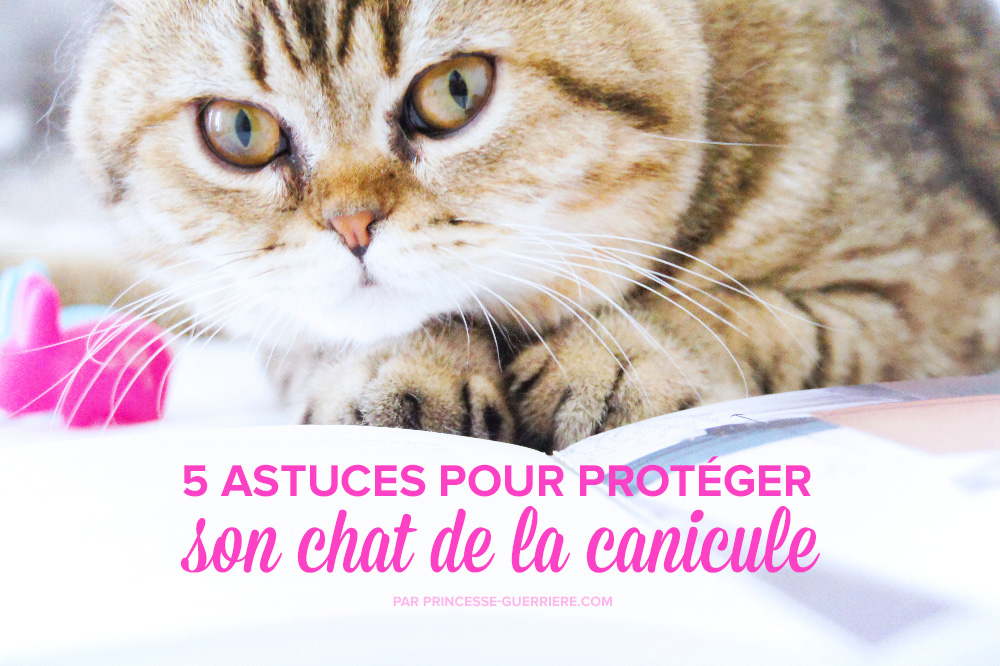 chat-canicule-preview