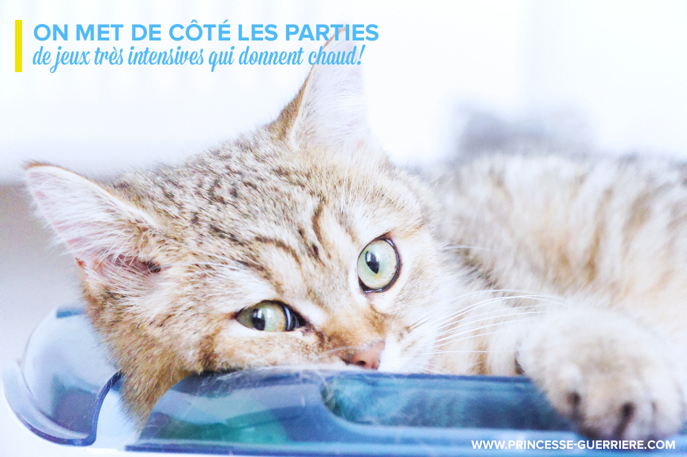 chat-canicule-jun