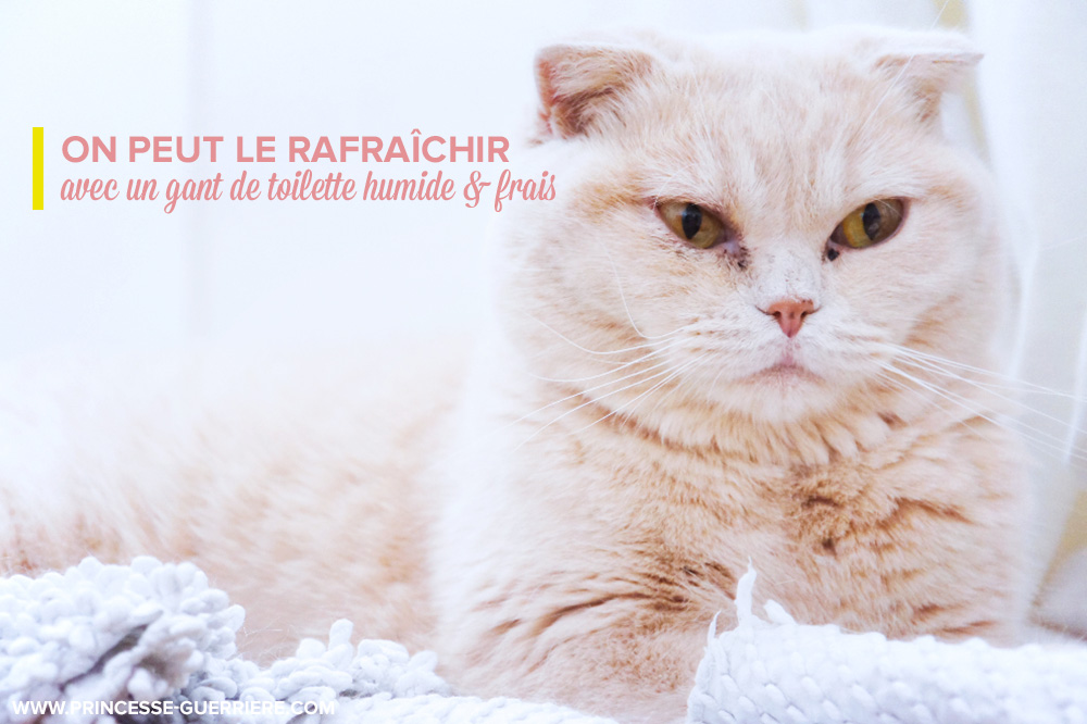 chat-canicule-holly
