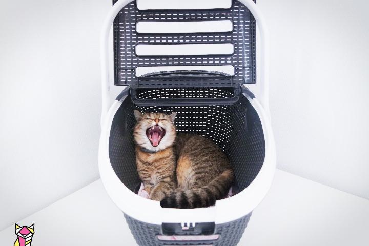 panier de transport pour chat bien le choisir mes tests mon. Black Bedroom Furniture Sets. Home Design Ideas