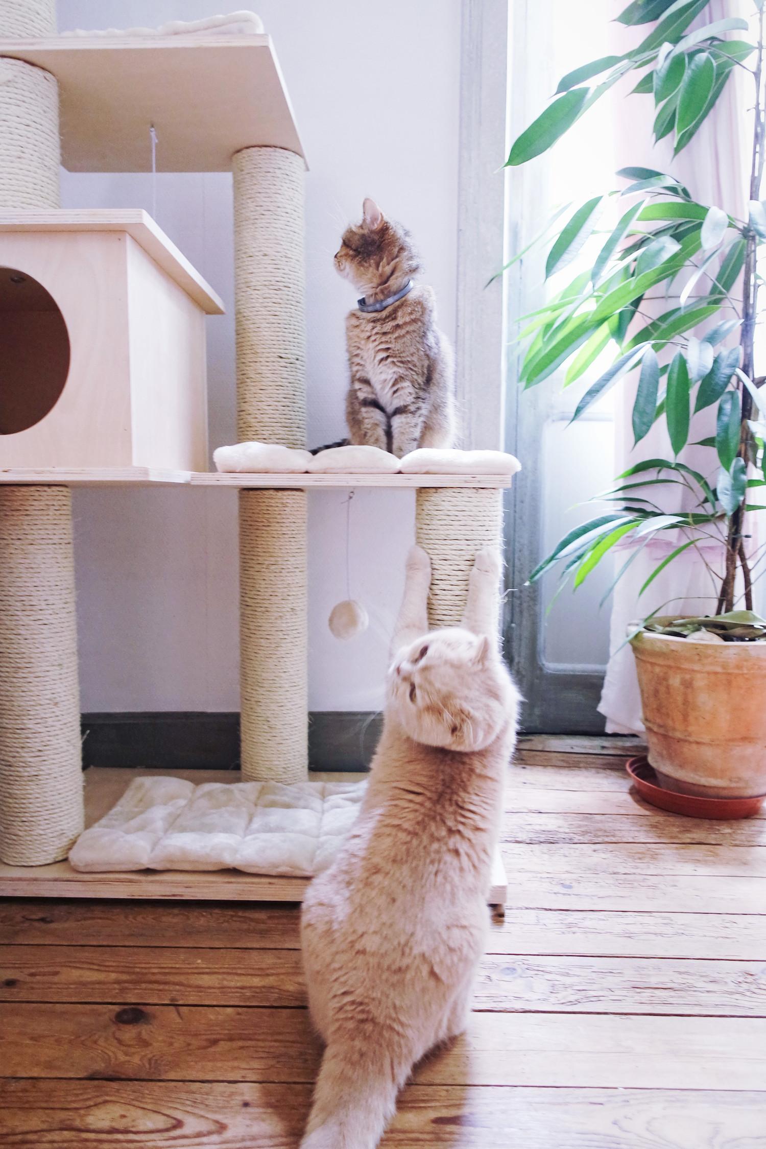 Comment Fabriquer Un Arbre À Chat arbre à chat: bien le choisir!